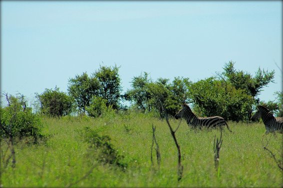 Your Guide to Kruger National Park Safari in South Africa
