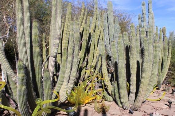 Photo Review: Desert Park Phoenix