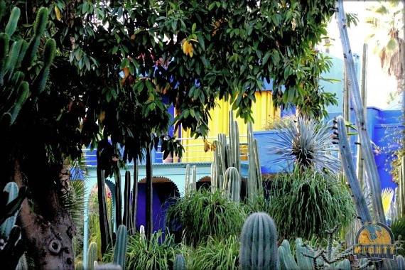 Photo Review Jardin Majorelle Marrakech, Morrocco