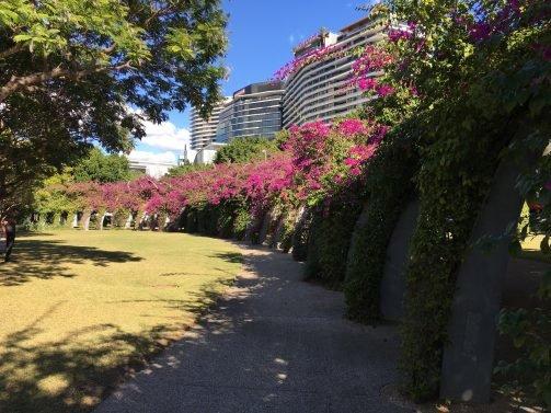 My Favorite 15 Things to do Brisbane