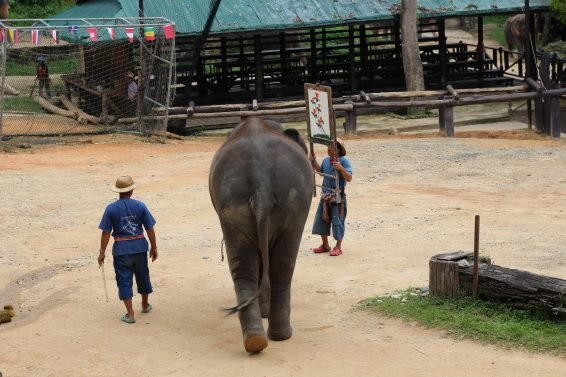 My 30 Favorite Things to do Chiang Mai