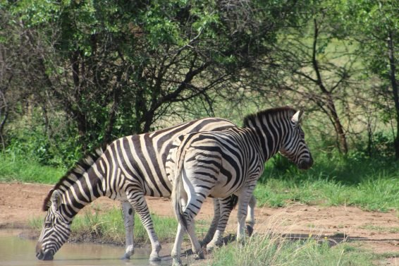 My favorite 10 Things To Do in Johannesburg, South Africa